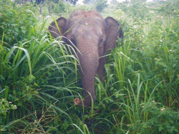 Elephant near the East Coast, em6